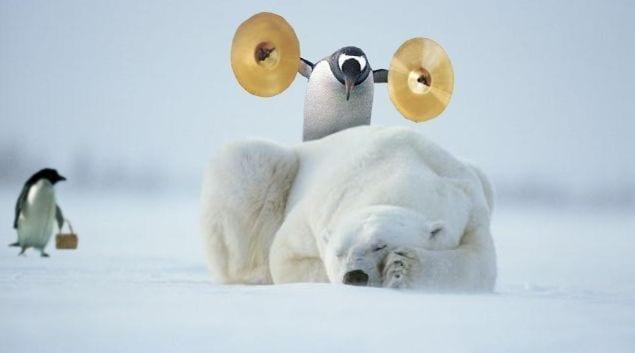 Bilden visar en pingvin och en isbjörn
