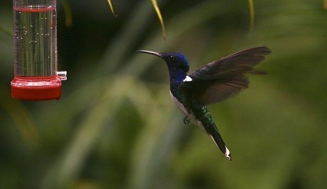 Bilden visar en hummingbird